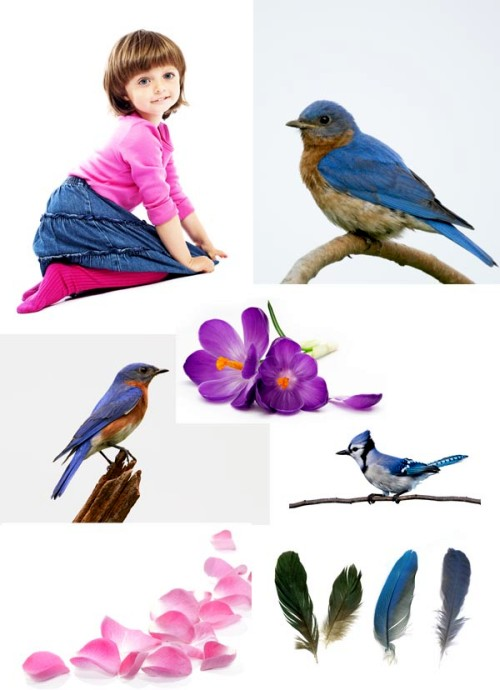 Создание необычной девочки-птицы