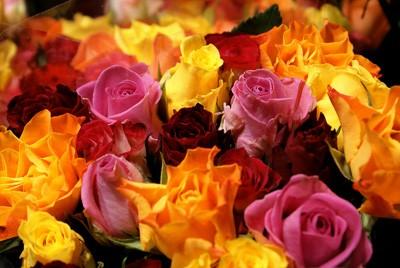 Брызги из роз