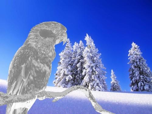 Попугай из льда
