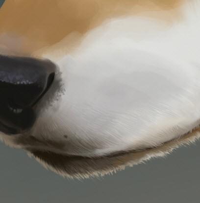 Рисуем волка в Фотошоп