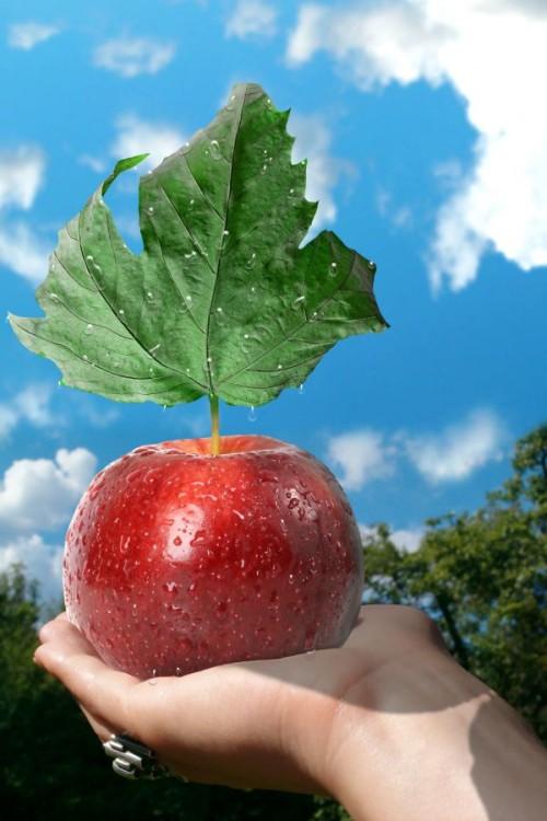 Необычный коллаж с яблоком