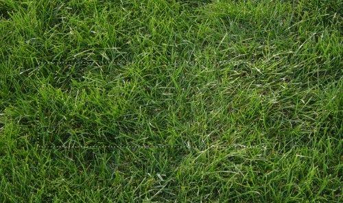 скачать траве через торрент